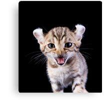 Funny Kitten Canvas Print