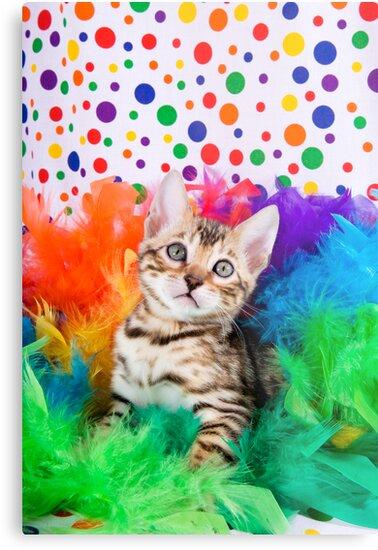 Party Bengal Kitten by idapix