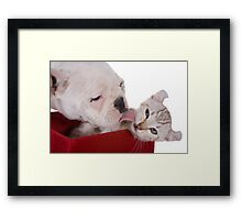 Puppy and Kitten Kisses Framed Print