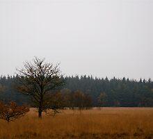 Westerbork by Rudolf