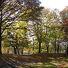 Autumn View by Andy Harris