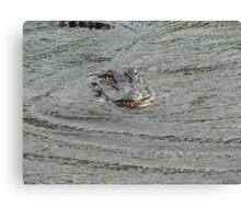 Swamp Gator Canvas Print