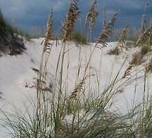 Sea Oats by StudioN
