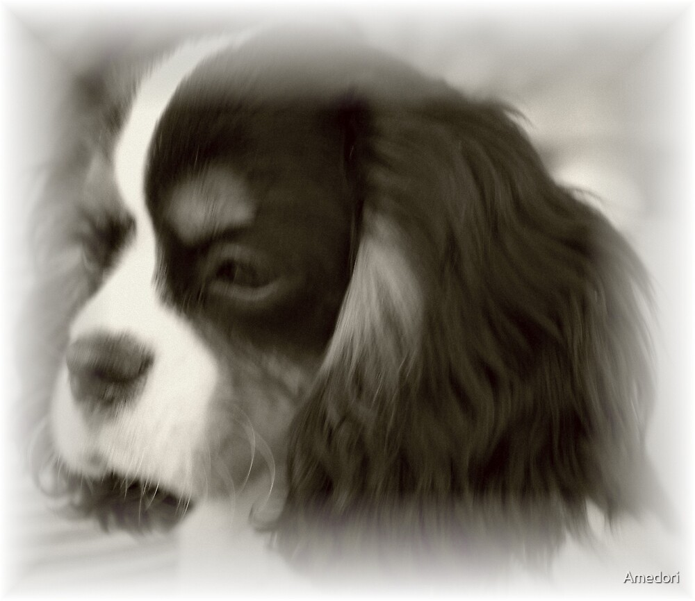 King Charles Spaniel  by Amedori