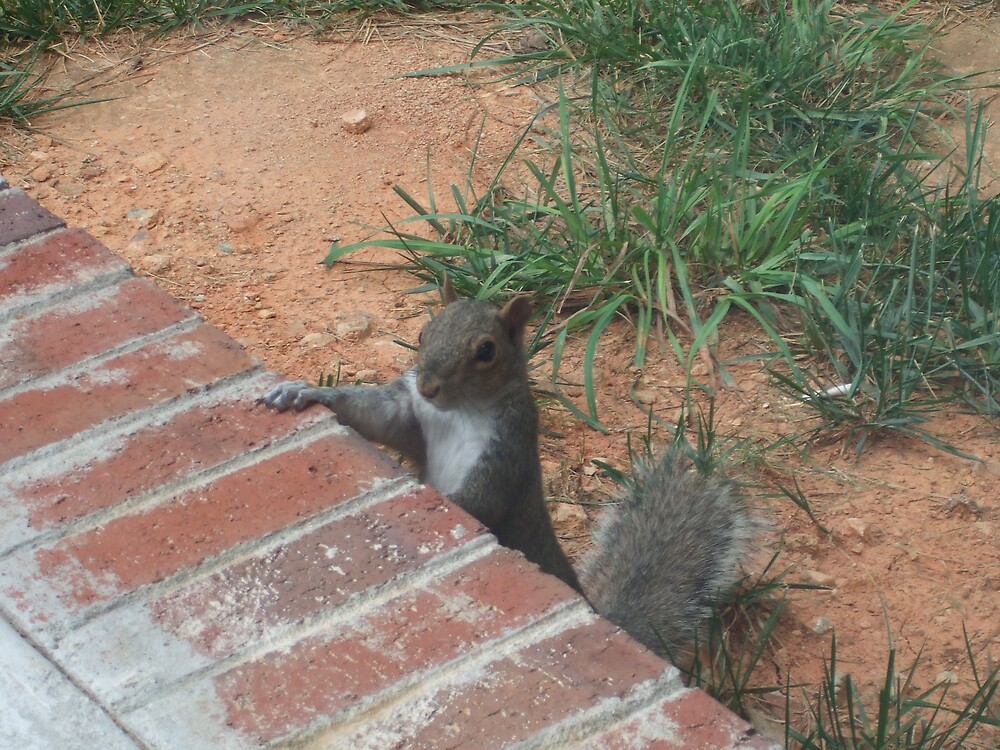 Friendly Squirrel by Kimberly D. Allen