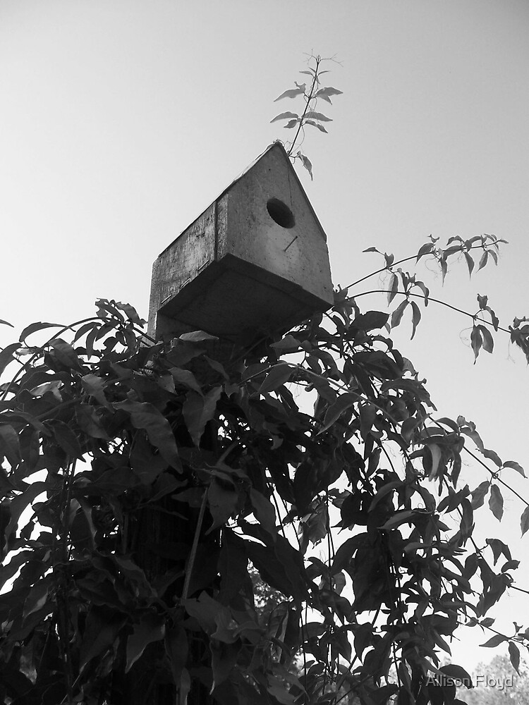Birdhouse in the skies by Allison Floyd