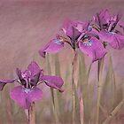 Three Iris' by jules572