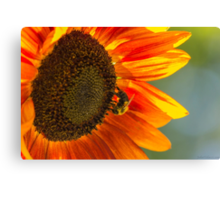 Sunflower 3 Canvas Print