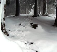 Foot prints  it snows in Georgia by allenmay60