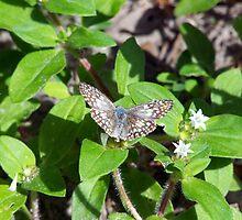 butterfly beauty by tomcat2170