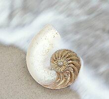 Nautilus by CarlyMarie