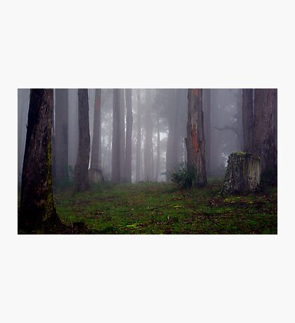 If you go out in the woods today... Photographic Print