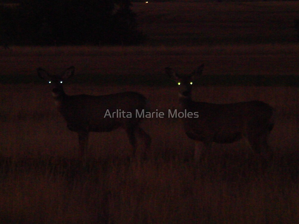 Turn your Lights on by Arlita Marie Moles