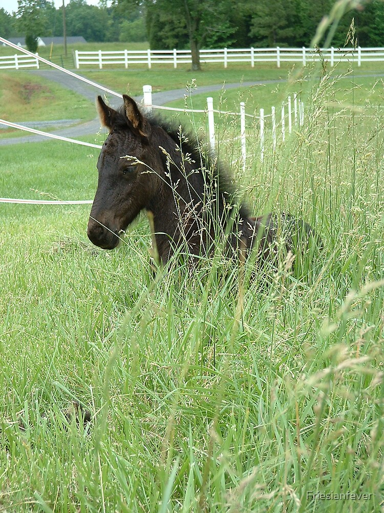 Grass Filly by Friesianfever