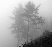 Trees in Fog 3 by Derek McMaster