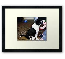 Puppy Indy Framed Print