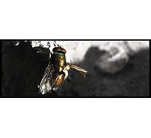 The Fly Cant Fly Photographic Print