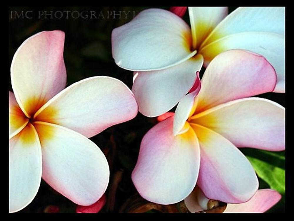 Aloha.. by Melissa  Carroll