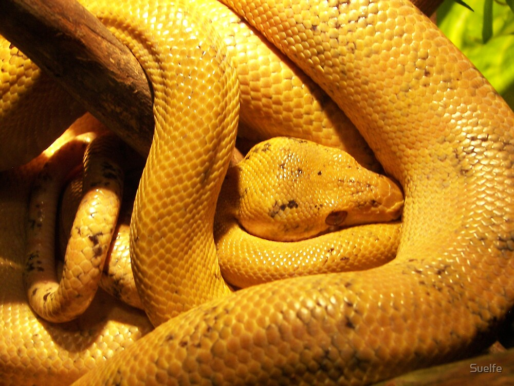 Snake - Central Park Zoo by Suelfe