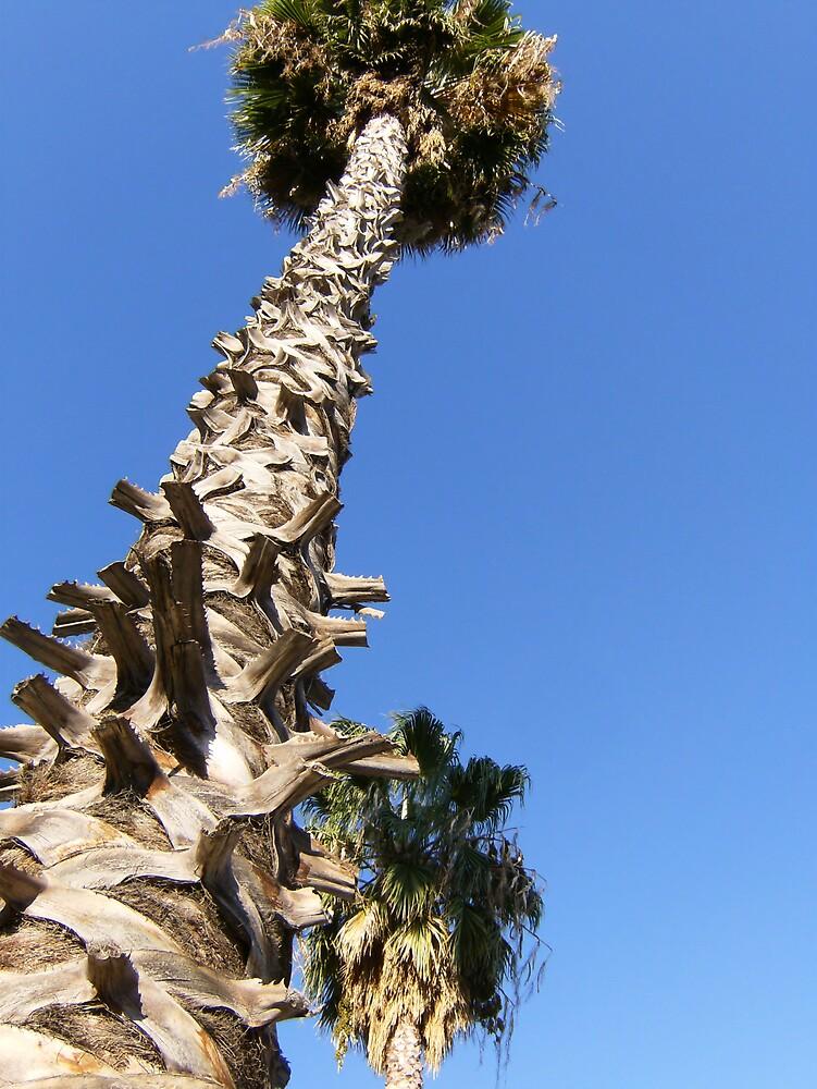 Twin Palms by cj913