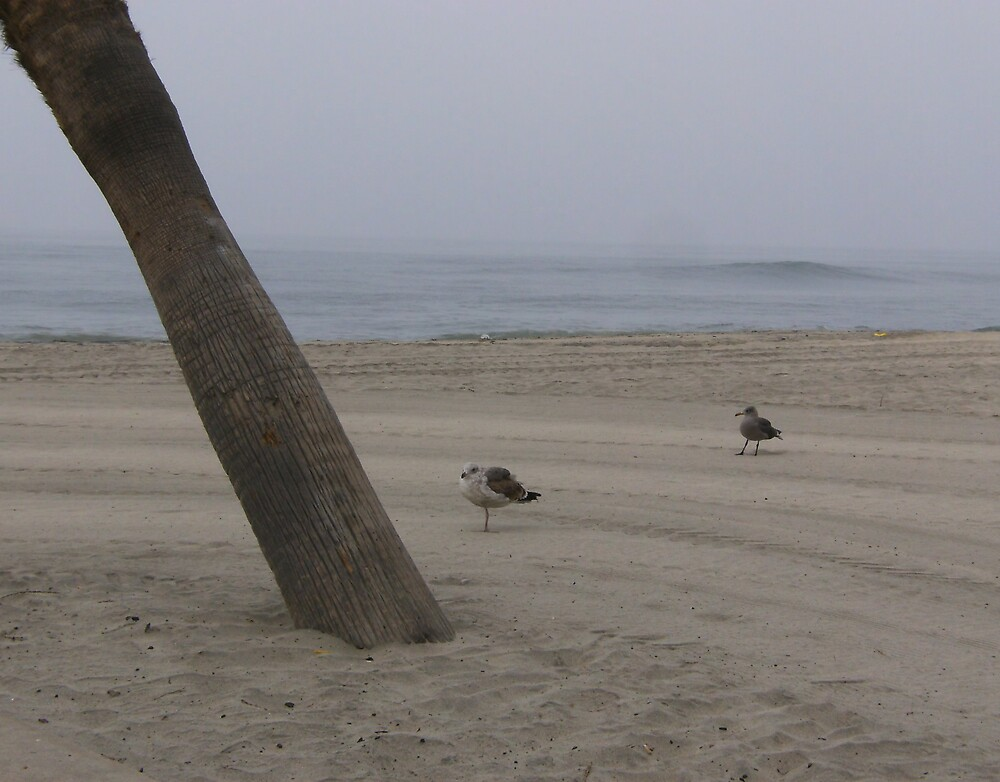 Gull Paradise by cj913