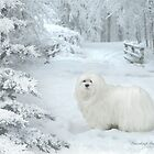 Snowdrop the Maltese - Cold Feet ! by Morag Bates