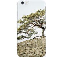 Pinus sylvestris iPhone Case/Skin