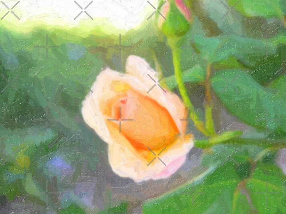 Spring Rose by Sandra Chung