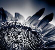 Moody Sunflower  by IamPhoto