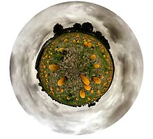 Small World in the Pumpkin Patch Photographic Print