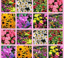COLORFUL WILD FLOWER PHOTO COLLAGE by JLPOriginals