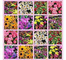 COLORFUL WILD FLOWER PHOTO COLLAGE Photographic Print