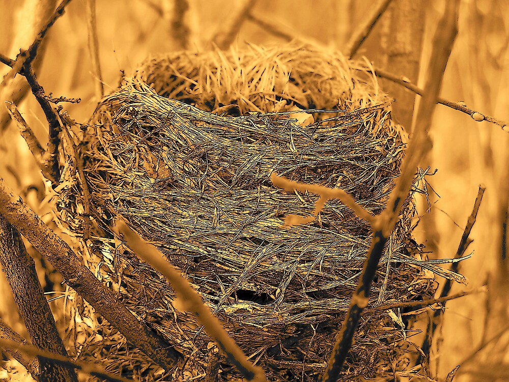 Empty Nest by Gene Cyr