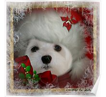 Snowdrop the Maltese on Christmas Eve Poster