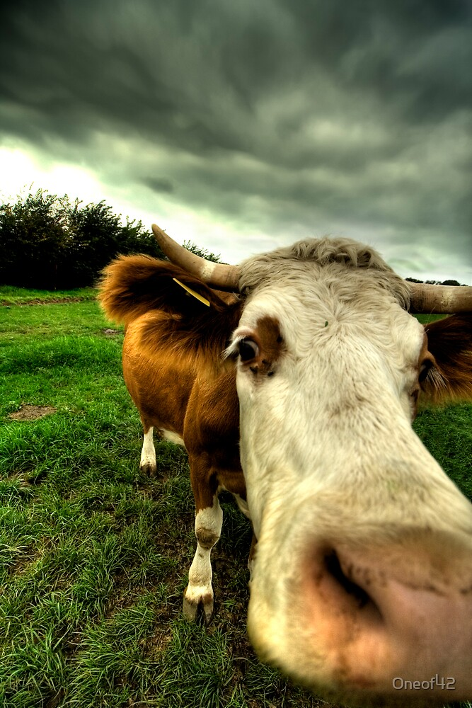 Lens cleaning - cow style by Oneof42