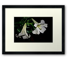 Two white lilies Framed Print