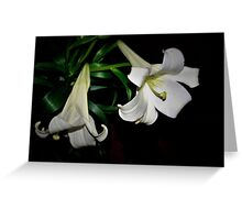 Two white lilies Greeting Card