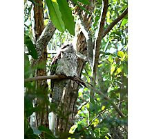 Frogmouth #1 all by Myself Photographic Print