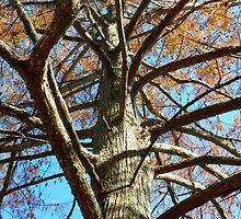 Up A Bare Tree by WildestArt