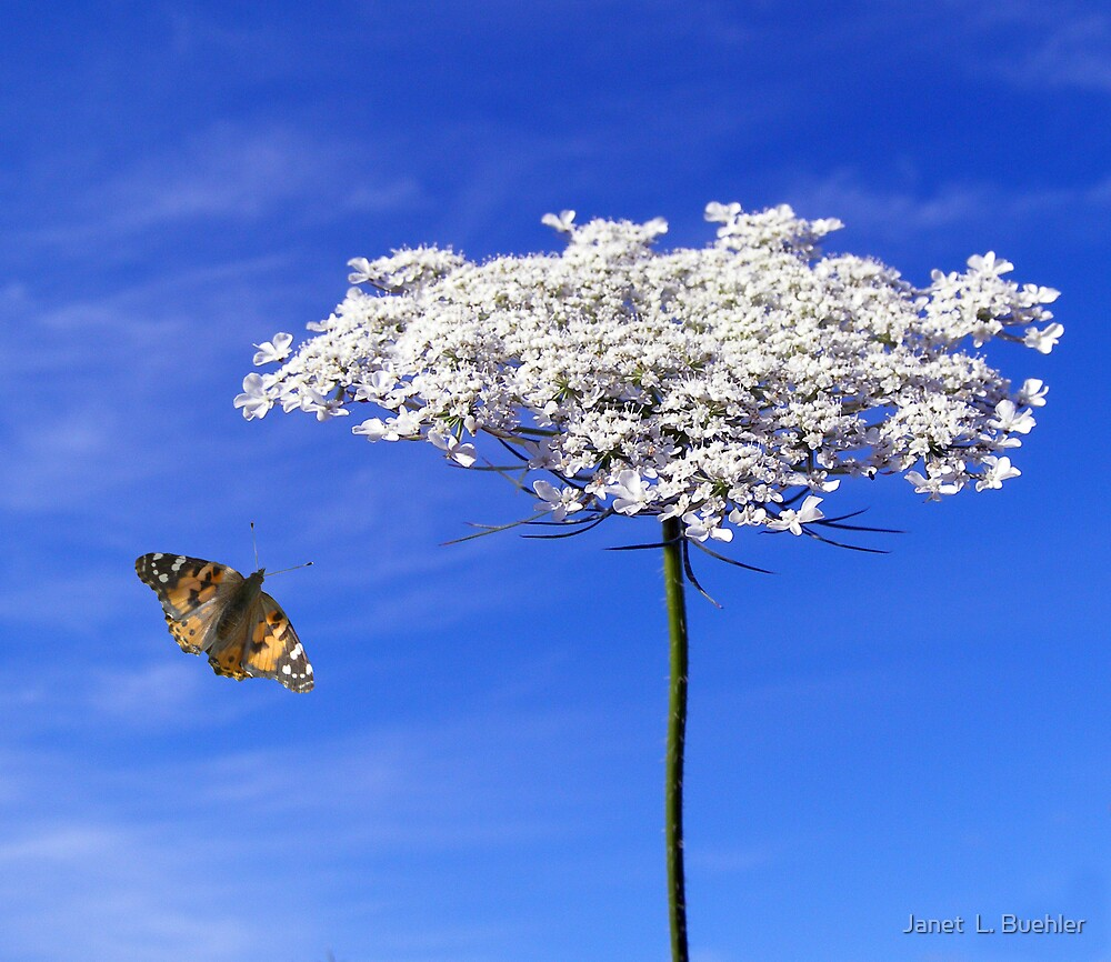 Butterfly and the Flower by Janet  L. Buehler