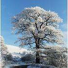 Winter Tree... by MY Scotland