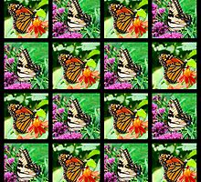 BEAUTIFUL BUTTERFLY PHOTO COLLAGE by JLPOriginals