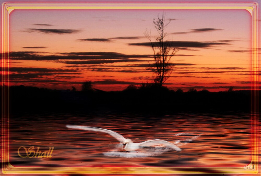 Swan Landing by shall