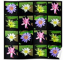 COLORFUL WATER LILY PHOTO COLLAGE Poster