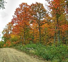 The Lonely Road of Fall by Ed Warick