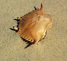 Crabby by Kyle Kappmeier