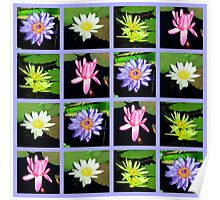 WONDERFUL WATER LILY PHOTO DESIGN Poster