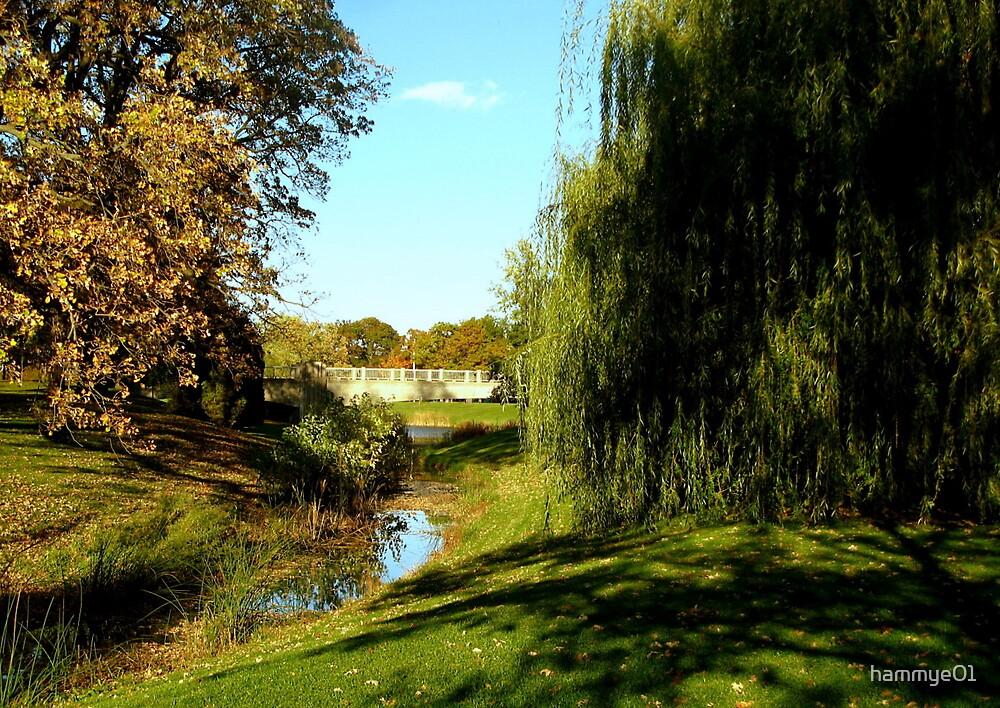 A walk in the park by hammye01