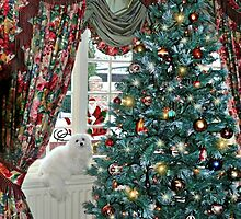 Snowdrop the Maltese - Christmas Morning by Morag Bates