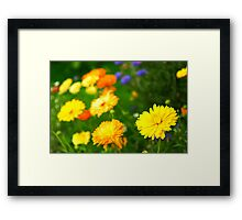 Flower background Framed Print